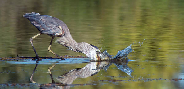 Photograph - Great Blue Heron 0786-070119 by Tam Ryan