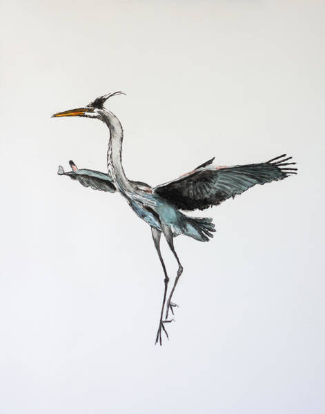 Painting - Great Blue Heron Acrylic Ink 1 by Rick Mosher