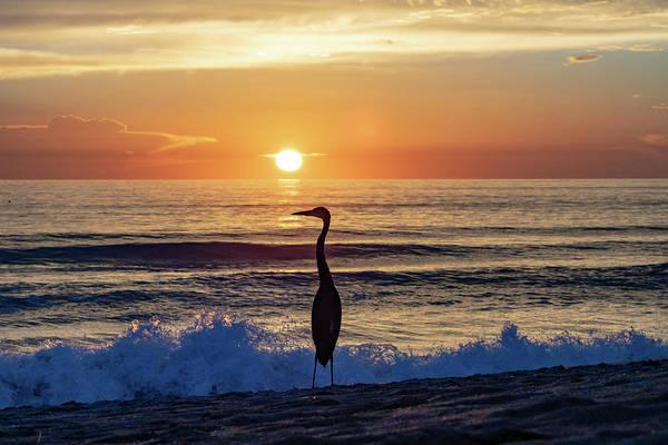 Ormond Photograph - Great Blue Heron At Sunrise by Mary Ann Artz