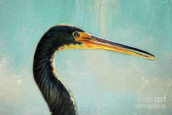 Wall Art - Photograph - Great Blue Heron by Darren Fisher