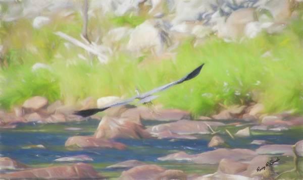 Digital Art - Great Blue Heron In Flight. by Rusty R Smith