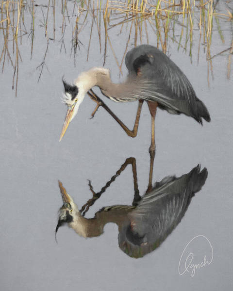 Photograph - Great Blue Heron by Karen Lynch