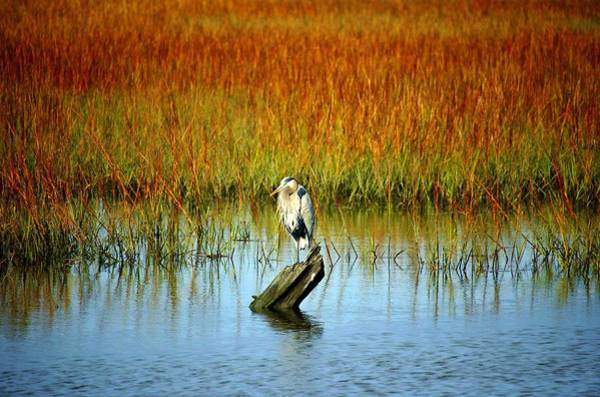 Photograph - Great Blue Heron On Wood by Cynthia Guinn
