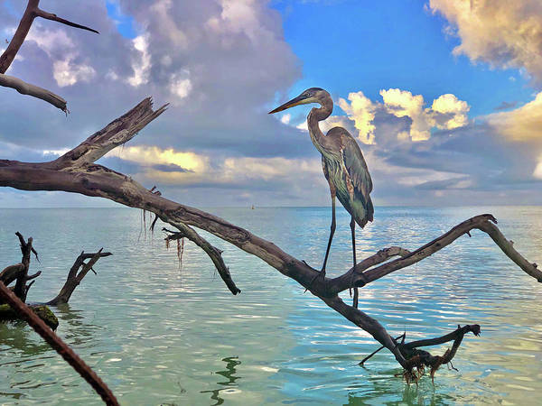 Photograph - Great Blue Heron by Robb Stan