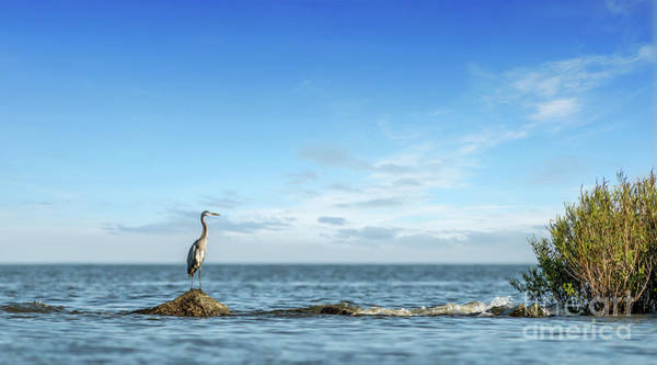 Photograph - Great Blue Heron Standing On A Rock Jetty On The Chesapeake Bay by Patrick Wolf