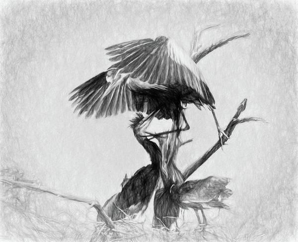 Digital Art - Great Blues II Sketch by Dawn J Benko