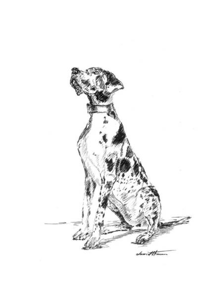 Drawing - Great Dane 02 by Dawid Theron