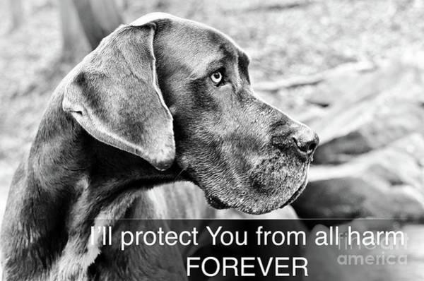 Digital Art - Great Dane-service Dog2 by Kathy Tarochione