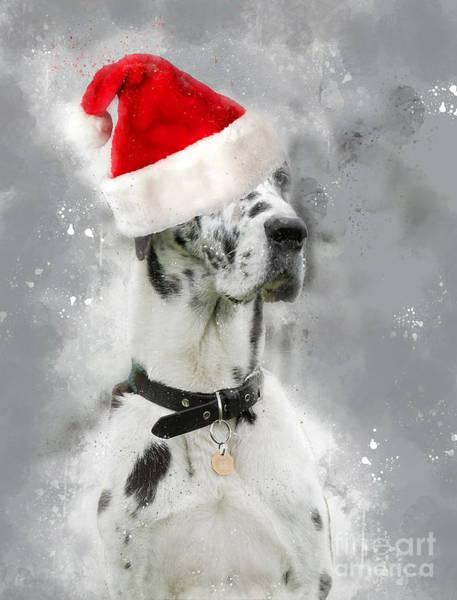 Photograph - Great Dane Wearing Santa Hat by Doc Braham
