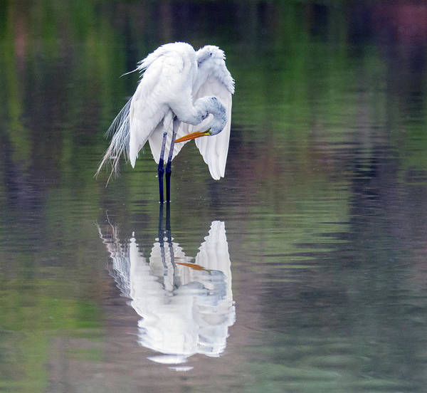 Photograph - Great Egret 2806-071219 by Tam Ryan
