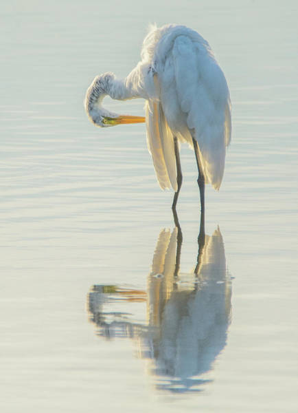 Photograph - Great Egret 6692-081819 by Tam Ryan