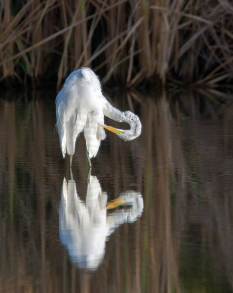 Photograph - Great Egret 6698-081819 by Tam Ryan