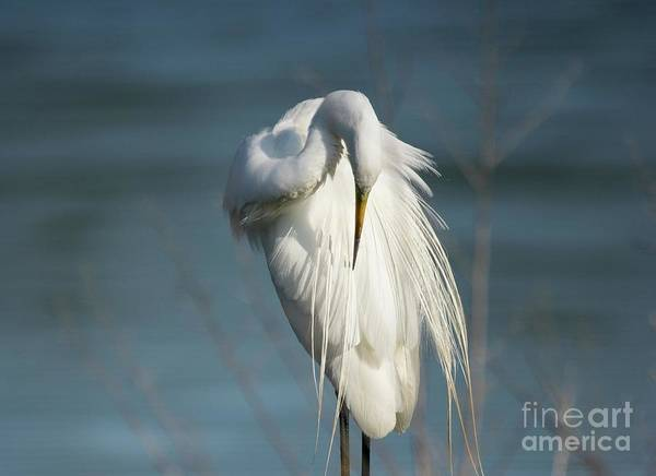 Wall Art - Photograph - Great Egret by DiFigiano Photography