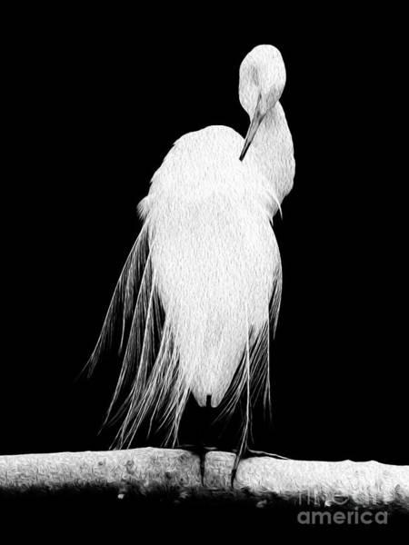 Great Egret In Full Bloom II Art Print