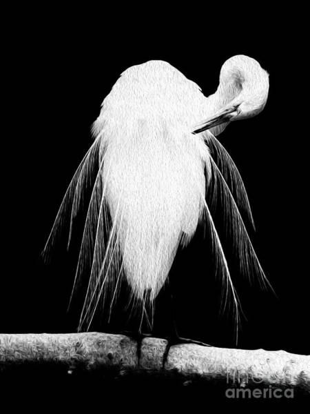 Great Egret In Full Bloom 3 Art Print
