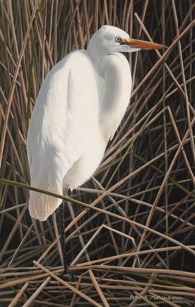 Painting - Great Egret by Peter Mathios