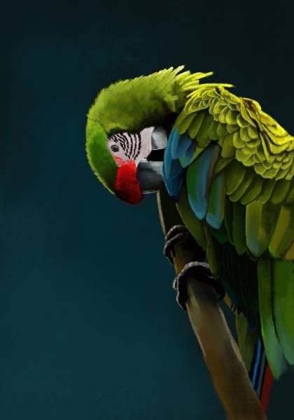 Parrot Digital Art - Great Green Macaw by KC Gillies