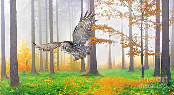The Grey Photograph - Great Grey Owl In Autumn by Laura D Young