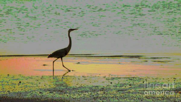 Wall Art - Photograph - Great Heron On The Beach by Sharon Mayhak