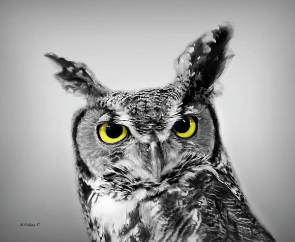 Wall Art - Photograph - Great Horned Owl Color Select by Brian Wallace