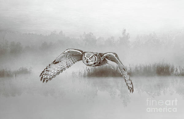 Hoot Wall Art - Photograph - Great Horned Owl Soars Bw by Laura D Young
