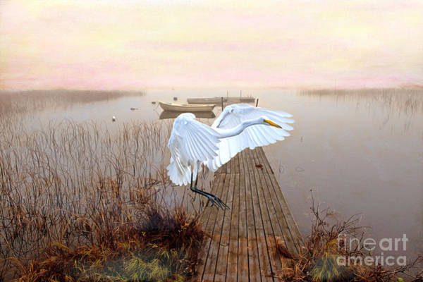 Great Egret Photograph - Great White Heron Landing by Laura D Young