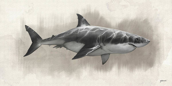 Digital Art - Great White Shark Drawing by Steve Goad