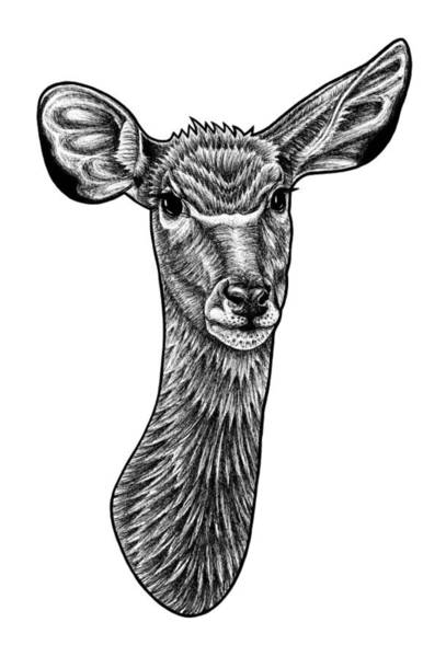 African Animal Drawing - Greater Kudu - Ink Illustration by Loren Dowding