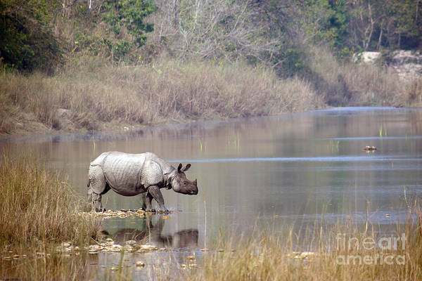 No-one Wall Art - Photograph - Greater One-horned Rhinoceros Specie by Paco Como