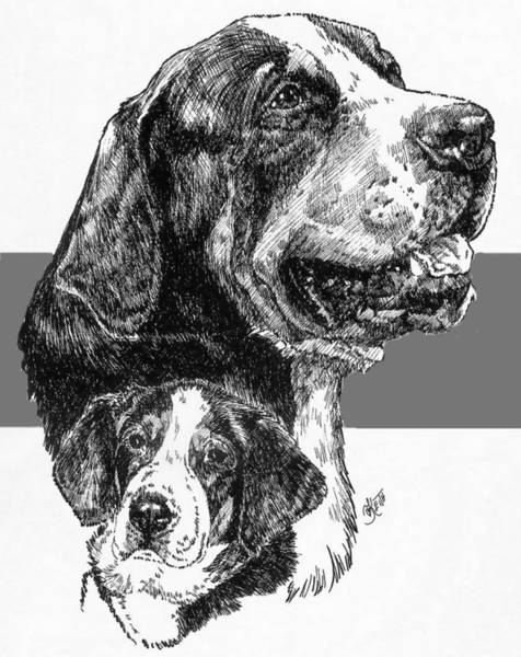 Drawing - Greater Swiss Mountain Dog And Pup by Barbara Keith