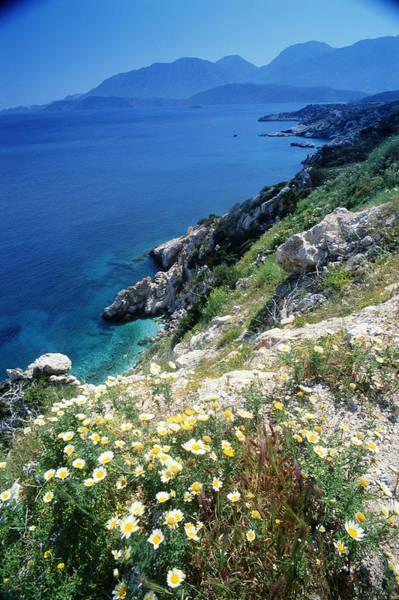 Wall Art - Photograph - Greece, Crete, Wild Flowers On Cliff by Peter Adams