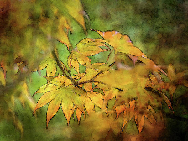 Photograph - Green And Gold Maple 5581 Idp_2 by Steven Ward
