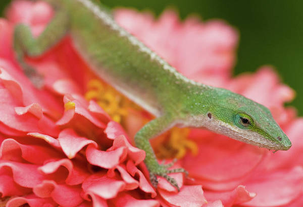 Selective Focus Photograph - Green And Pink In Garden by Jeff R Clow