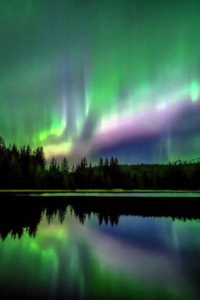 Wall Art - Photograph - Green And Purple Northern Lights by John Hyde