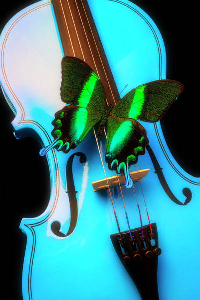 Wall Art - Photograph - Green Butterfly On Blue Violin by Garry Gay