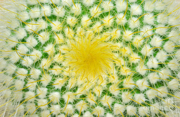 Vibrant Color Wall Art - Photograph - Green Cactus And Yellow Prickles by Ruslan Grechka