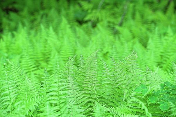 Photograph - Green by Dan Friend