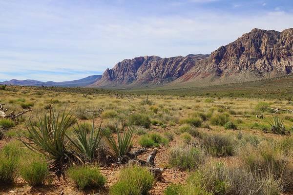 Photograph - Green Desert by Sagittarius Viking