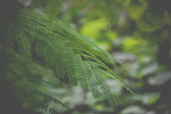 Photograph - Green Fern2 by Michelle Wermuth