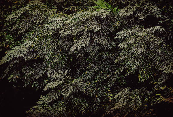 Photograph - Green Foliage 3 #nature  by Andrea Anderegg