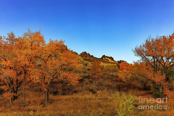 Photograph - Green Gold And Blue by Jon Burch Photography