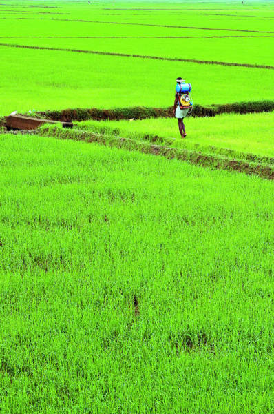 Wall Art - Photograph - Green Grass Earth Paddy Kerala by Anoop Negi