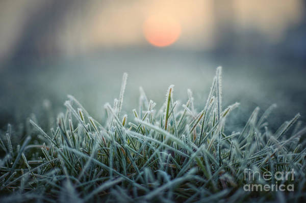 Wall Art - Photograph - Green Grass With Morning Frost And Red by Chromakey