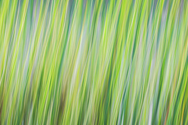 Photograph - Green Grasses by Brad Bellisle