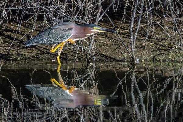 Photograph - Green Heron 6569-061419 by Tam Ryan