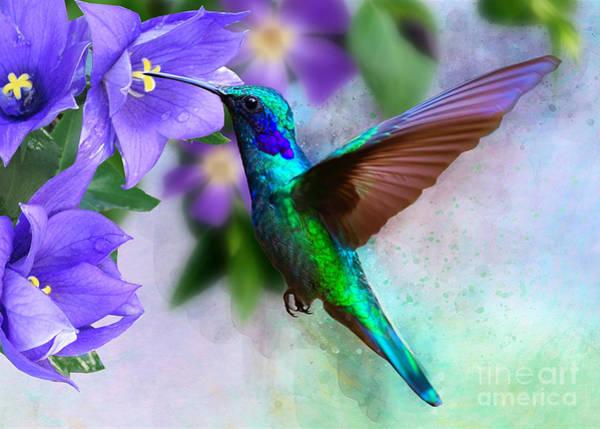 Digital Art - Green Hummingbird On Campanua by Morag Bates