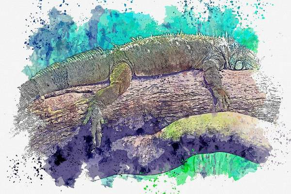 Painting - Green Iguana -  Watercolor By Ahmet Asar by Celestial Images