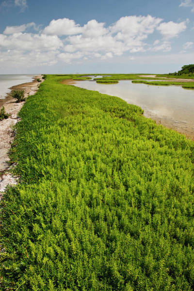 Vertical Perspective Photograph - Green Island Sanctuary, Laguna Madre by Danita Delimont
