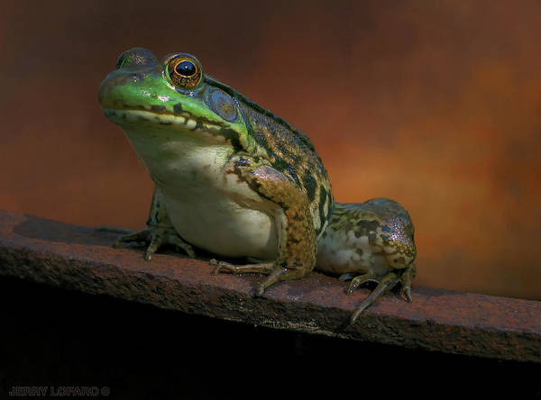Frog Photograph - Green by Jerry LoFaro