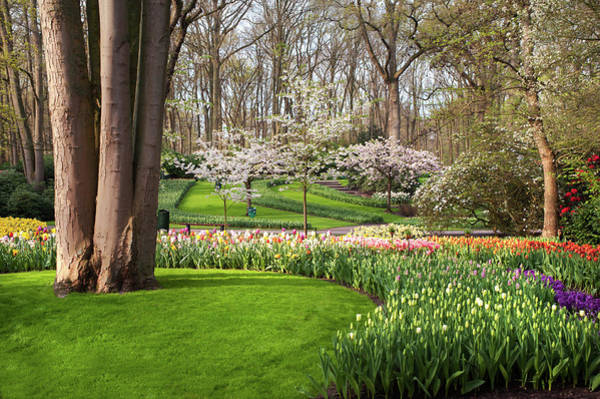 Photograph - Green Lawn With Spring Blooms In Keukenhof by Jenny Rainbow